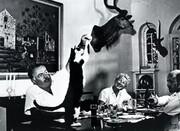 تصاویر | حیوانات خانگی، الهامبخش نویسندههای بزرگ | گربههای ۶ انگشتی برنده نوبل، باغ وحش خانگی و طاووسهای خانم نویسنده