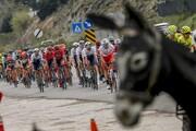 عکس روز | «سر خر» در تور دوچرخهسواری