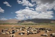 خشکسالی 80 درصدی مراتع خراسان جنوبی | وضعیت نامطلوب معیشت عشایر