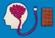 کشف مکانیسم «سوئیچ گرسنگی» در مغز به امید درمان چاقی