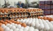 کاهش قیمت تخم مرغ درمیادین تره بار + نرخ جدید