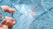دانشمندان «قیچی ژنتیکی» را وارد مرغ و خوکهای مهندسیشده کردند