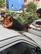 تصاویر | آخرین خبرها از طوفان تهران | رگبار تا فردا ادامه دارد | شهروندان به دامنه ها و ارتفاعات نروند