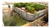 نخستین مزرعه آکوآپونیک کشور در مازندران ساخته میشود