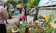 برگزاری ویژهبرنامه باغچه و دیوار سبز در منطقه ۷