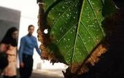 حشرات مزاحمی که با دعوتنامه به تهران آمده بودند! | حجت نظری: رسیدگی به تخلفات مدیران دوره گذشته با سرعت بیشتری دنبال شود