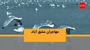 ویدئو | مهاجران عشق آباد | گشتی در تالاب چشمنواز حوالی تهران به بهانه روز جهانی پرندگان مهاجر