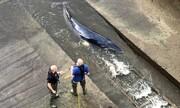 تصاویر| نجات بچهنهنگ گیرکرده در رودخانه تیمز لندن