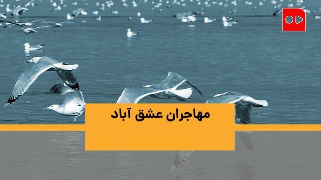 روز جهانی پرندههای مهاجر به روایت تالابی در اطراف تهران