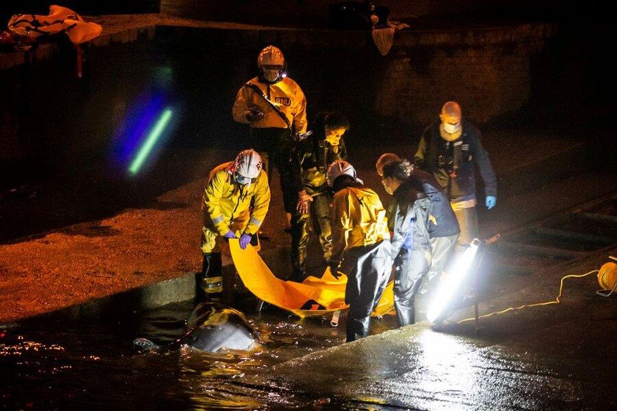 تصاویر  نجات بچهنهنگ گیرکرده در رودخانه تیمز لندن