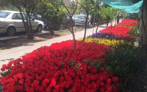 جشنواره گل سرخ اصفهان