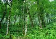 اختصاص ۲۸ میلیارد تومان به حفاظت از جنگلهای گیلان