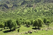 مساحت جنگلهای همدان پایینتر از استانهای دیگر است
