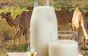 خاصیت باور نکردنی شیر شتر