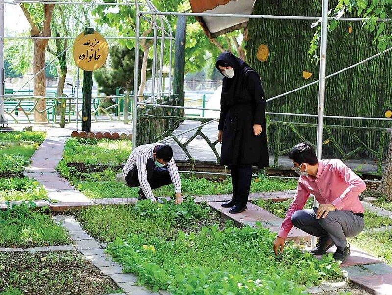 باغچه محلی