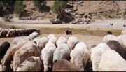 دامپروری چهارمحال و بختیاری، زیر تیغ خشکسالی