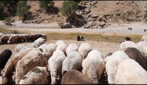 خشکسالی در مراتع زاگرس