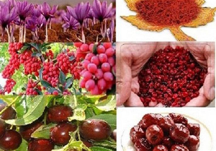 برندسازی محصولات کشاورزی اولویت خراسانجنوبی
