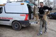 راهبردهای لازمالاجرا در مدیریت سگهای بلاصاحب
