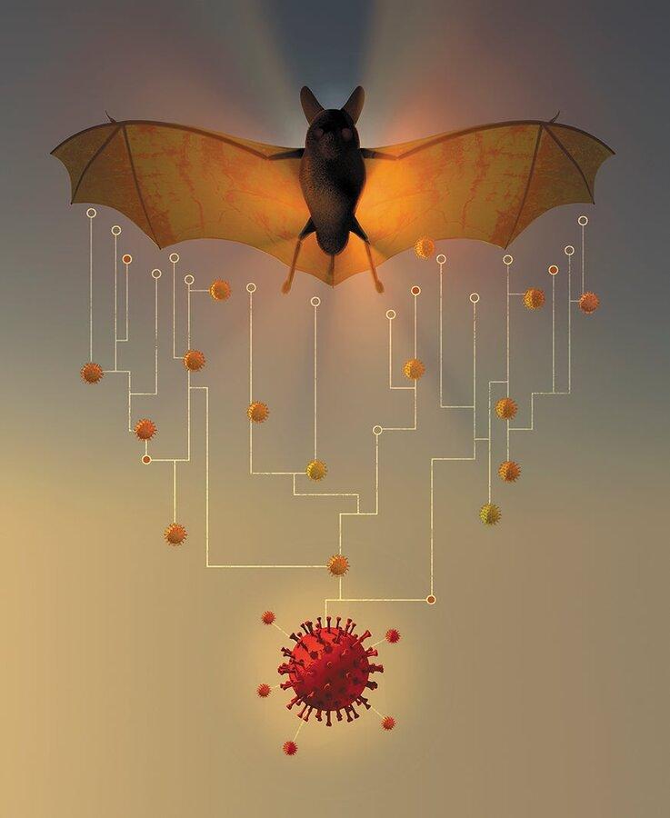 horseshoed bat