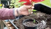 روش نگهداری گل و گیاه در تابستان
