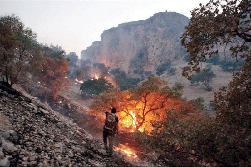 آتش در جنگل