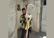 عکس | چنبره مار سمیِ ۴متری روی سینه زن صاحبخانه