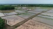 گیلان؛ مقام اول تجهیز و نوسازی اراضی شالیزاری کشور