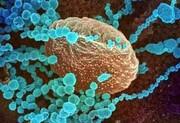 گونه دلتای کروناویروس خطر بستریشدن بیماران را دو برابر میکند