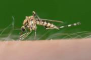 تغییرات اقلیمی پای پشهها را به فصل زمستان باز میکند!