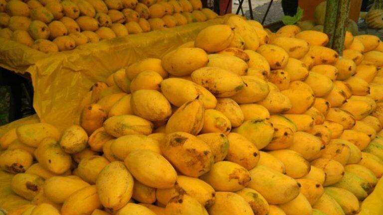 کاهش ۱۵ درصدی قیمت میوه | هر کیلو انبه ۳۰ هزار تومان است
