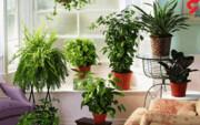 جلوگیری از گرمازدگی گیاهان