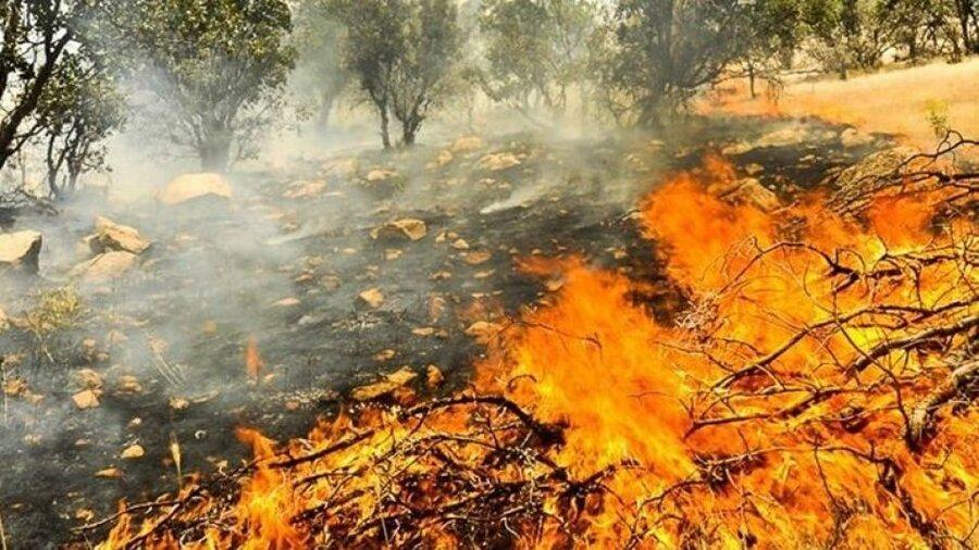 آتشسوزی - جنگل - زاگرس