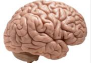 احتمال از دست رفتن ماده خاکستری مغز در مبتلایان به کووید-۱۹