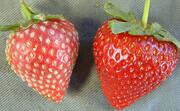 میوه کپکزده را میتوان خورد؟
