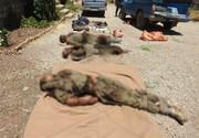 انهدام تیم تروریستی در کردستان | ۵ تروریست به هلاکت رسیدند