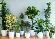 ۸ گیاهی که خانه را خوشبو میکنند