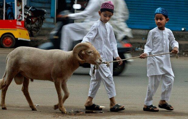 تصاویر | افغانستان امسال و در آستانه عید سعید قربان چگونه است؟