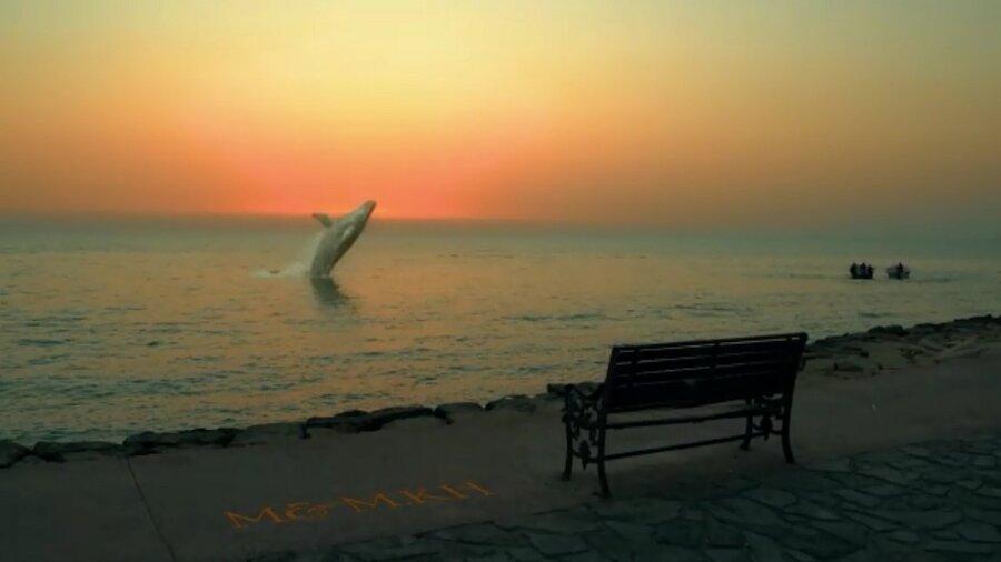 نهنگ در ساحل بوشهر