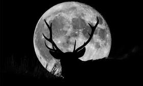 اگر ماه توتفرنگی را از دست دادهاید از فرصت امشب استفاده کنید | ظهور ماه گوزن در آسمان