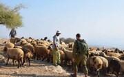 نیروهای رژیم صهیونیستی ۵۰۰ راس دام را از خاک لبنان دزدیدند