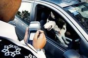 رها کردن حیوانات خانگی داخل خودرو ممنوع شد