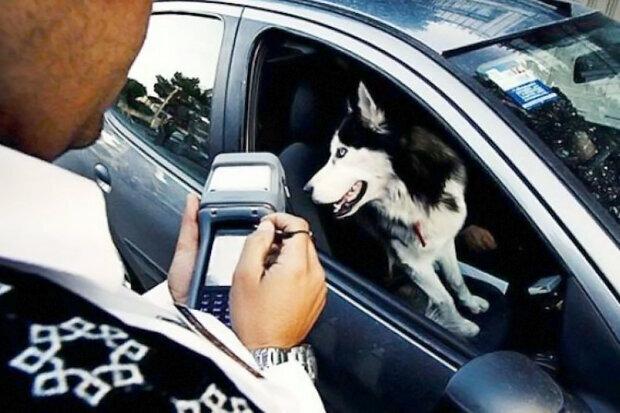 سگ گردانی با خودرو
