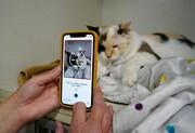 عکس روز| اپلیکیشنی برای تشخیص بیماری گربه