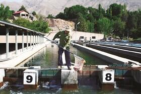 چهارمحال و بختیاری، پیشتاز در تولید ماهی سردآبی