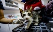 عکس روز| درمان گربه مجروح
