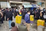 پرواز مرغها از قزوین به تهران