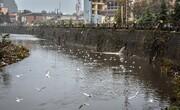 پاکسازی رودخانههای رشت از شبکههای درهم فاضلاب