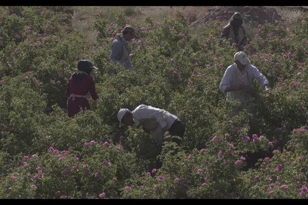 مستند «ایرانزاد»