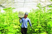 کشاورزی خراسانجنوبی نفس تازه میکند